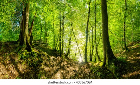 Beautiful forest with sunshine