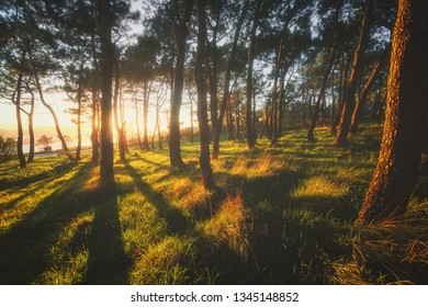 beautiful forest with sunshine at the sunset