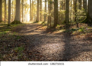 Beautiful forest trail in spring with bright sun light shining through the trees