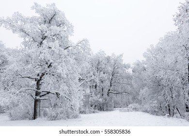 Beautiful forest in the white hoarfrost on the frosty winter day in Russia