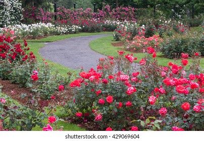 A beautiful formal rose garden