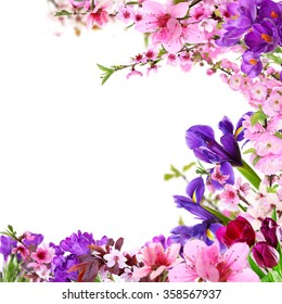 Beautiful frame with flowers on white background