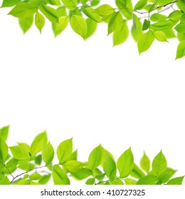 Beautiful frame with fresh green leaves on white background.