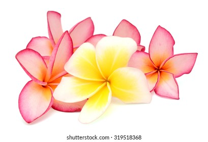 beautiful frangipani flower isolated on white background