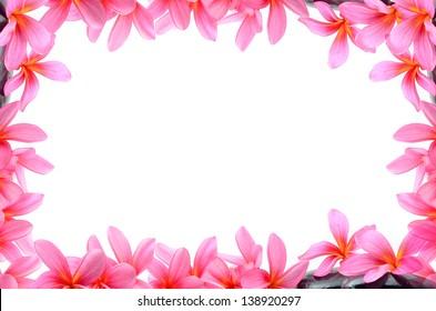 Beautiful Frangipani flowers - border design