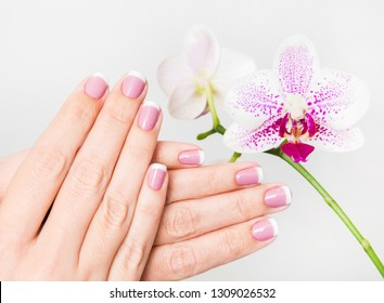 Beautiful french white and pink manicure. Woman holding beautiful hands near orchid flower isolated on white background. Horizontal color photography.