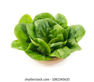 Beautiful Fresh Baby Spinach Leaves Isolated. Spinacia Oleracea or Leafy Green Vegetable