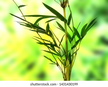 Beautiful and fresh background. Green plant on blur background. Green leaf background.