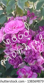 Goodmorning Images Stock Photos Vectors Shutterstock
