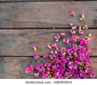 Beautiful fresh flowers on a wooden background
