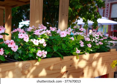 Beautiful fresh flowers in wooden stand on street