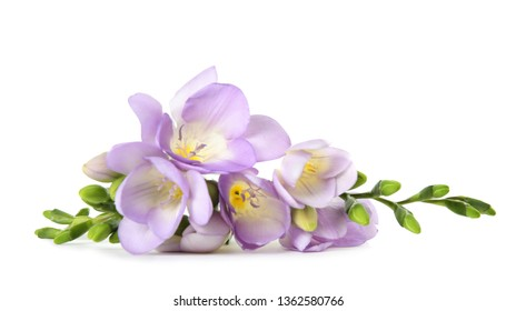 Beautiful fresh freesia flowers isolated on white