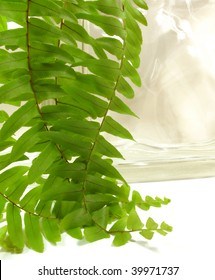 Beautiful, fresh green Boston fern