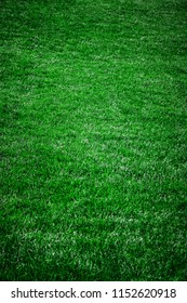 Beautiful fresh green grass background with vignette