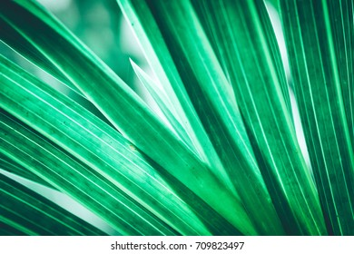 Beautiful of fresh green grass for background. Texture background of Green Leaf with back lighting. Creative layout made of tropical flowers and leaves. Flat lay. Nature concept.