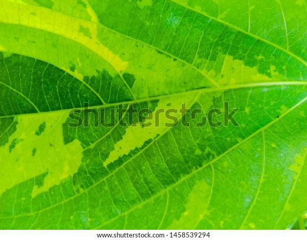 beautiful-fresh-green-leaf-close-600w-14