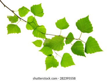 Beautiful Fresh Green Leaves  isolated on white background.