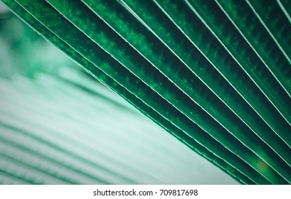 Beautiful of fresh green palm leaf for background. Texture of Green palm leaves seamless pattern. Creative layout made of tropical flowers and leaves. Flat lay. Nature concept. Vector illustration.