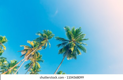 Beautiful fresh green palm trees over clear blue sky background, abstract natural theme, amazing sunny day on tropical beach resort, summer vacation concept
