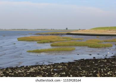 beautiful fresh green salt marsh along the sea with ebbing tide