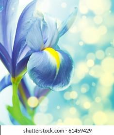 Beautiful fresh iris flowers