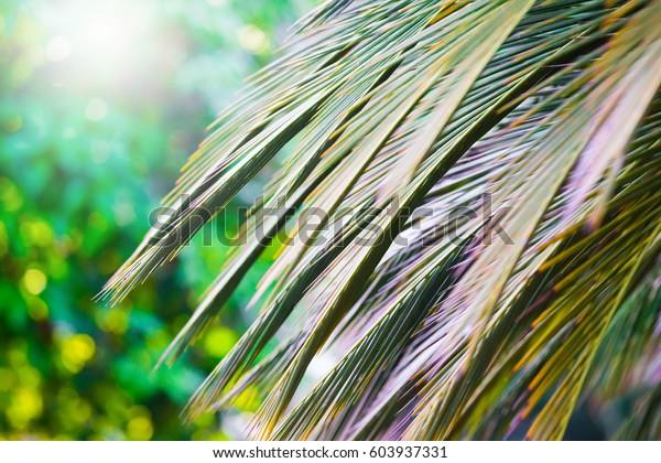 Beautiful Fresh Palm Leaves Green Garden Stock Photo Edit Now