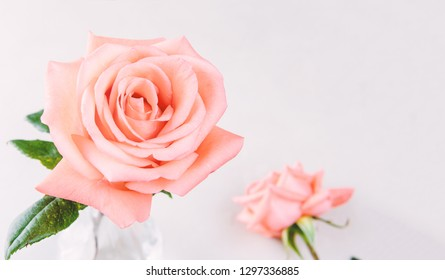 Beautiful fresh pink rose in glass vase with copy space - Image