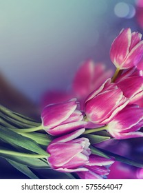 Beautiful fresh pink tulips.Beautiful greeting card.