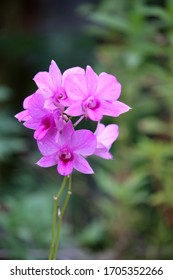 a beautiful and fresh purple orchid after being doused in rainwater at night