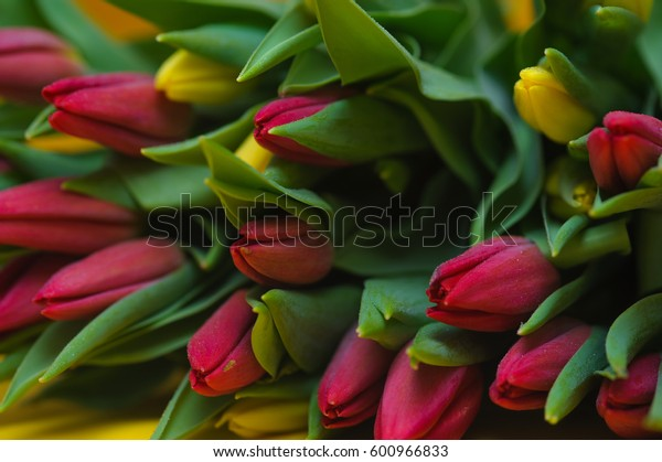 Beautiful fresh red and yellow tulips background