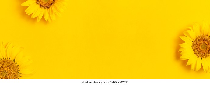 Beautiful fresh sunflowers on bright yellow background. Flat lay, top view, copy space. Autumn or summer Concept, harvest time, agriculture. Sunflower natural background. Flower card. Long format