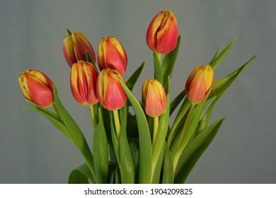 beautiful fresh tulips in a bouquet