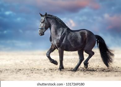 Beautiful frisian stallion run in sand against dramatic sky
