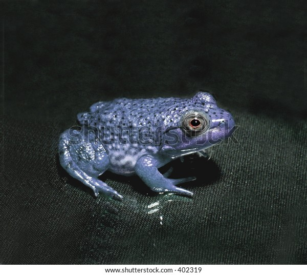Beautiful froggy in a bluish camouflage