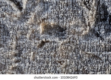 Beautiful frost crystals on wood close-up texture background