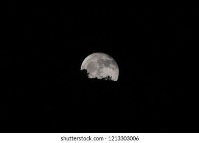 A beautiful full moon rising over ocotillo bushes and a tree silhouetted in the moonrise on a mountain peak as seen from Pima Canyon, north of Tucson, Arizona. October of 2018.