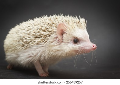 beautiful and fun rodent hedgehog background