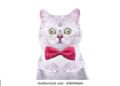 Beautiful funny british cat with glasses. Trendy cat in stylish dress. Funny animals
