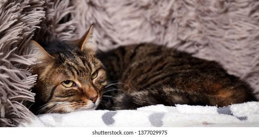 beautiful funny cat