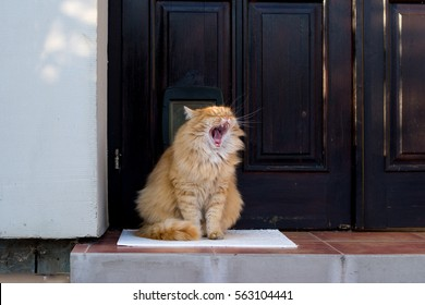 Beautiful funny cats laughs at the door.