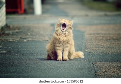 Beautiful funny cats in the streets