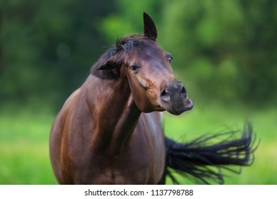 Beautiful funny horse close up portrait in spring green landscape