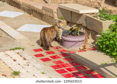 The beautiful furry brown color homeless cat standing on the street