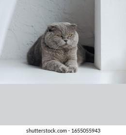 Beautiful furry Cat Sitting