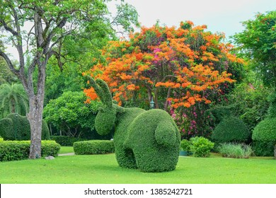 Beautiful garden art decoration  on blossom exotic trees background   in the park. Shaped bush rabbit. Topiary rabbit