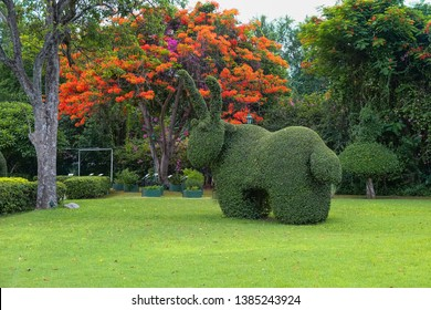 Beautiful garden art decoration  on blossom exotic trees background   in the park.Colorful lawn with topiary art. Shaped bush rabbit. Topiary rabbit