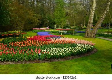 beautiful garden of colorful flowers in spring (keukenhof, The Netherlands)