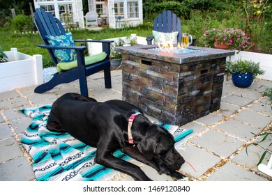 Beautiful Garden in the evening,  with Firepit, patio, andirondack chairs and Greenhouse in Background, with Great Dane Dog relaxing on a blanket