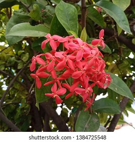 beautiful garden flower attractive color