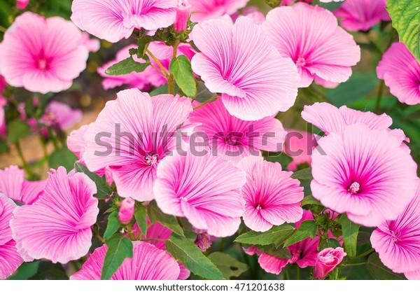 Beautiful Garden Flowers Common Names Species Stock Photo Edit